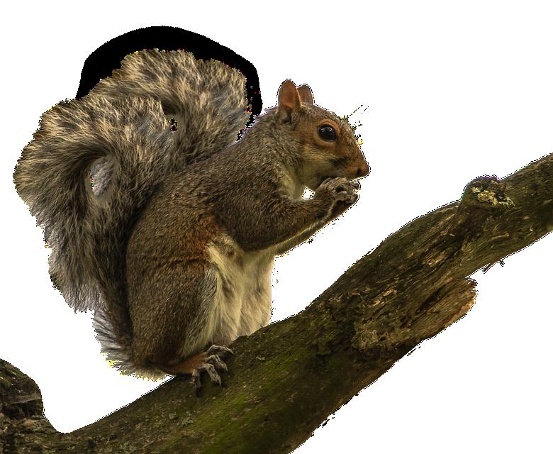 Displacer Squirrel